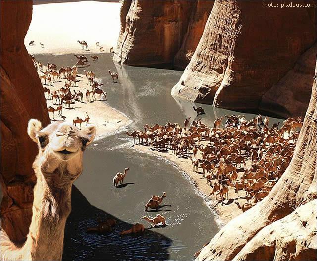 Guelta d'Archei Oásis - Chad - Deserto do Saara