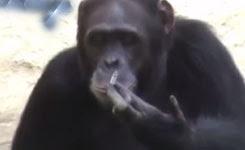 Funny Monkey Videos – A Funny Monkeys Compilation 2015