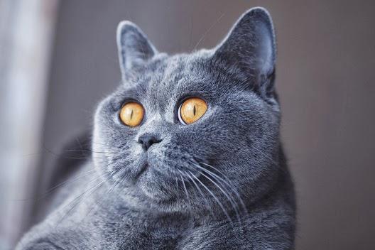 Dlaczego źrenice kotów się zwężają?