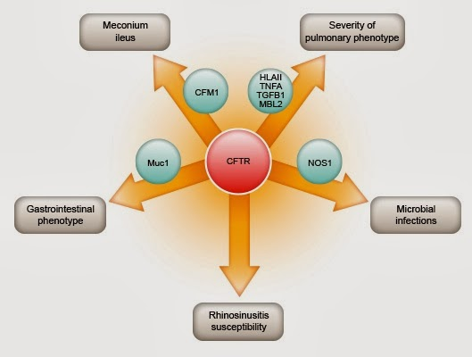 http://www.cftr.info/about-cf/role-of-ctfr-in-cf/cftr-mutations/the-correlation-between-cftr-mutations-and-disease-severity/modifier-genes/