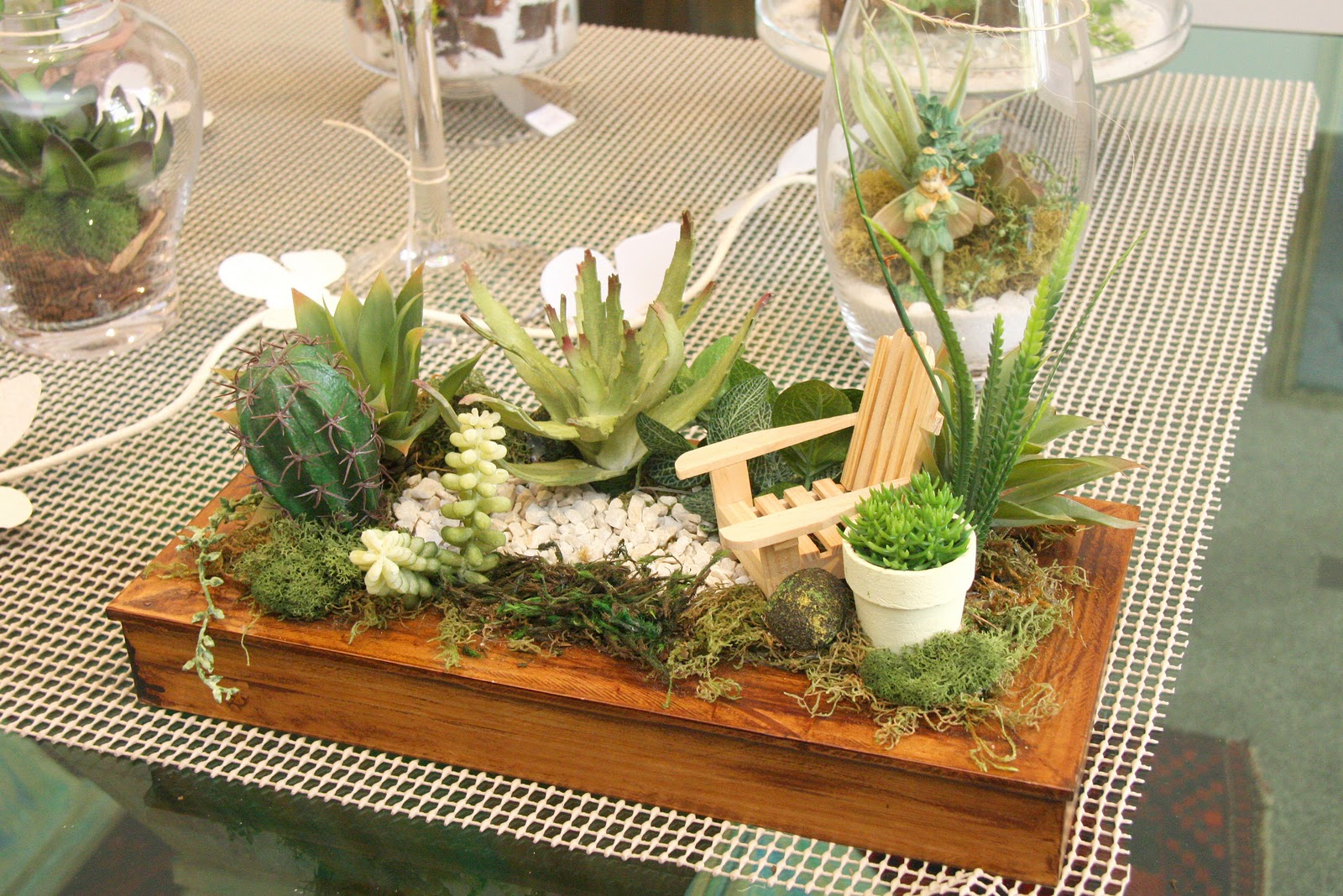 mini jardim de cactus:um mini jardim de cactus