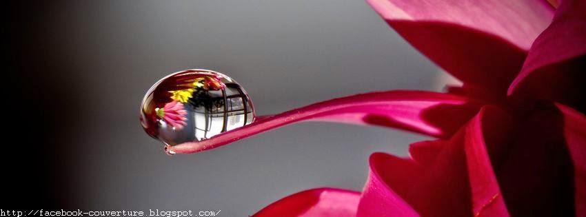 Belle photo de couverture facebook avec goutte d'eau sur fleur