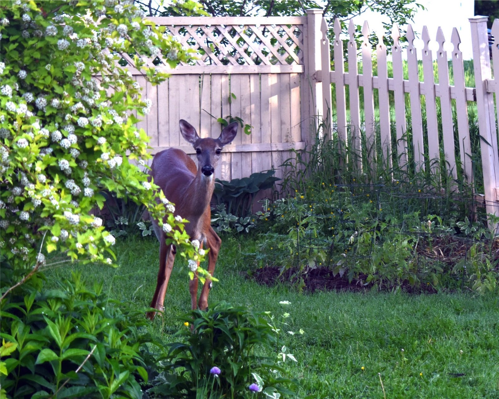 nature tales and camera trails deer in my backyard