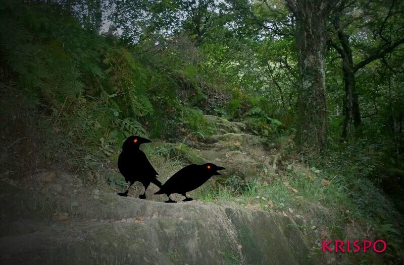 fotomontaje de cuervos en el bosque