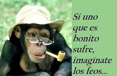 Imagenes chistosas de chipances - monos con frases graciodas para whatsapp