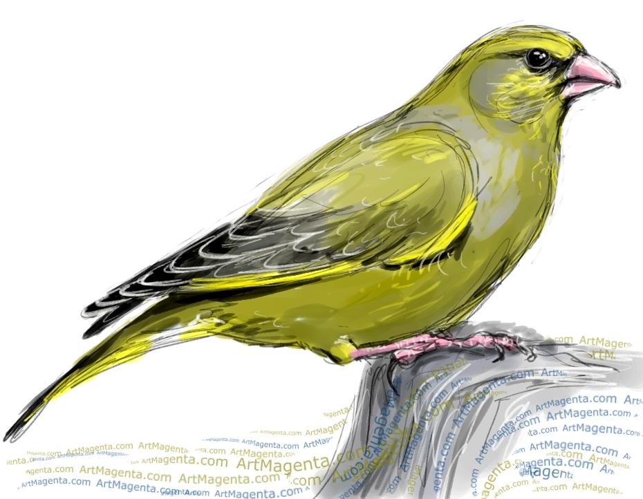 En fågelmålning av en grönfink från Artmagentas svenska galleri om fåglar
