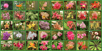 Collage of orchids