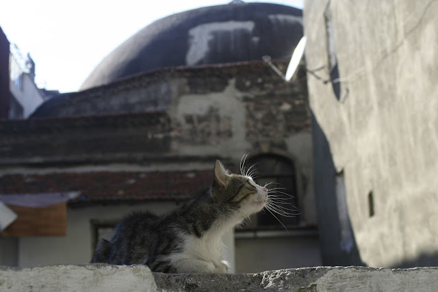 Hamam Cat