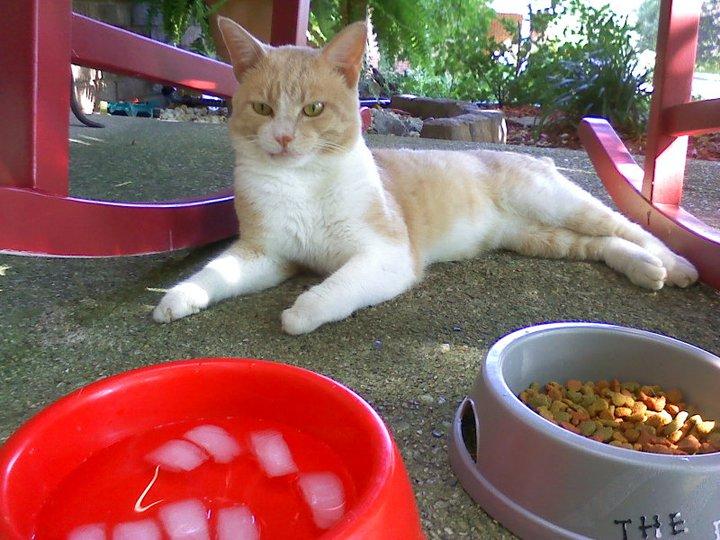 science diet indoor cat food
