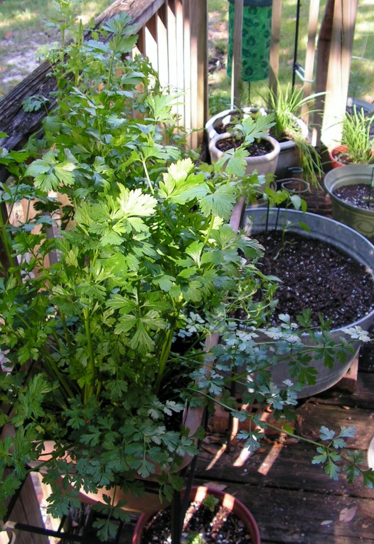 The suburban settler garden pilgrimage container gardening in florida - Container gardening in florida ...