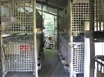 Mô hình chuồng trại nuôi chim bồ câu Pháp, bồ câu lai