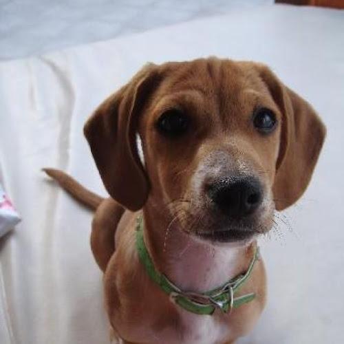 Gambar-Gambar Anjing Cantik