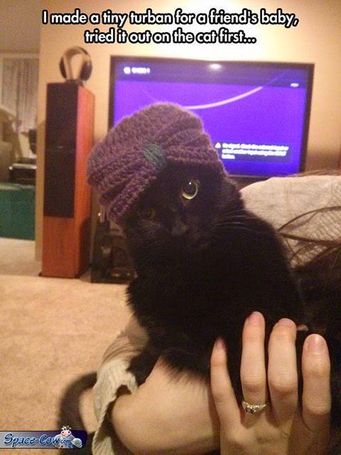 funny cat things humor
