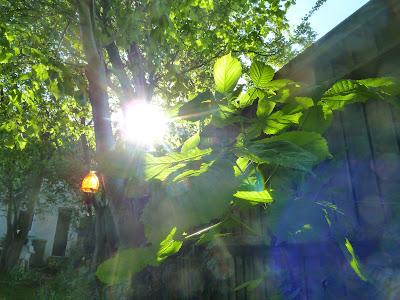 Sun shining through under the trees