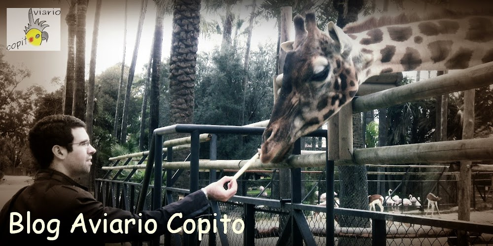 *·*·* Blog del Aviario Copito*·*·*