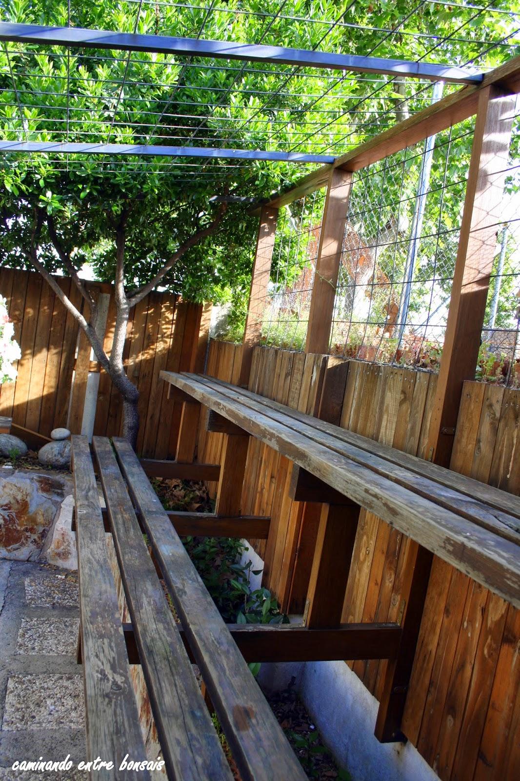 Caminando entre bonsais bancos de cultivo mantenimiento for Estanterias para bonsais