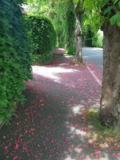 A quiet avenue
