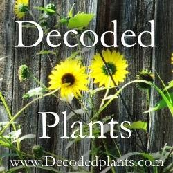 Decoded Plants