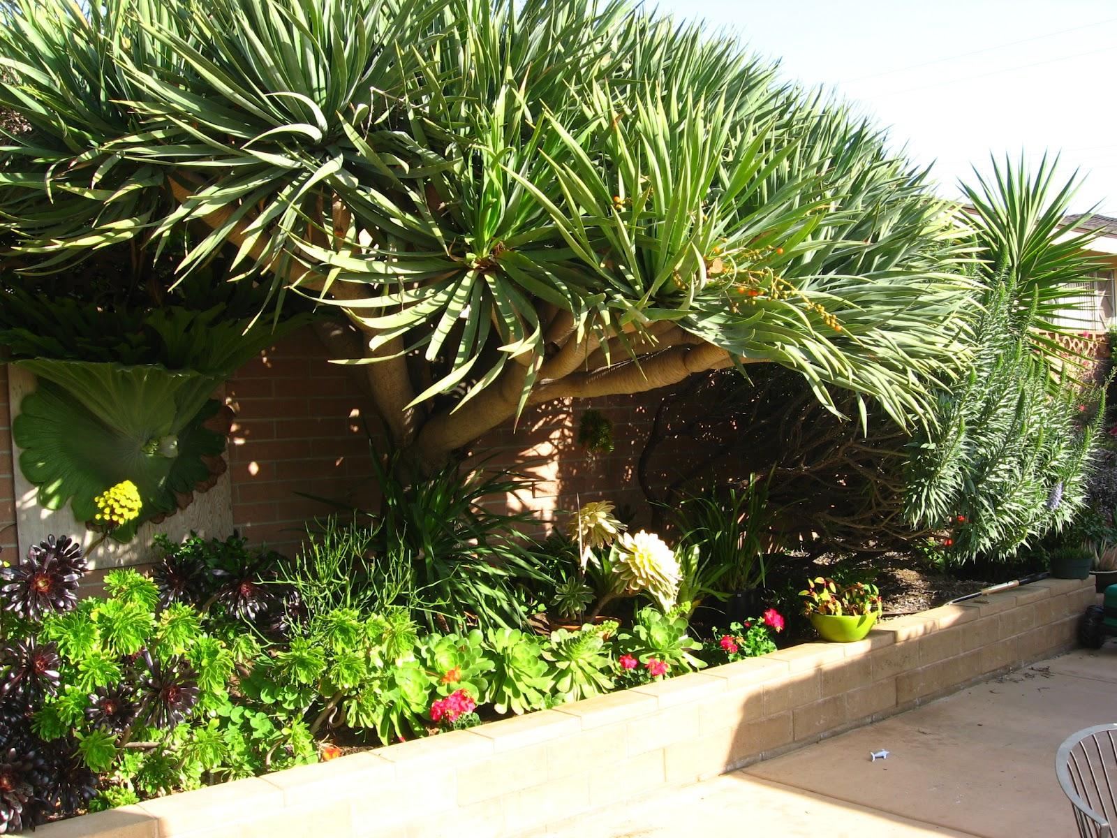 california arid garden my garden