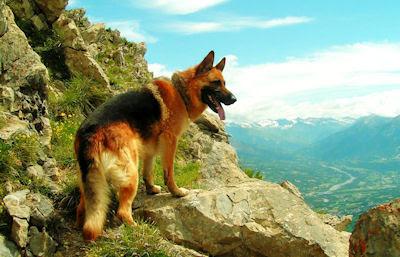 Un perro muy curioso mirando el paisaje en las montañas - Cute dog washing the natural landscape