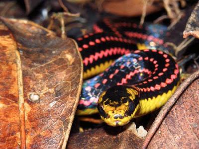 Dangerous Snakes Seen On www.coolpicturegallery.us