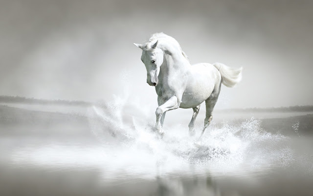 white_horse_water_wallpaper_hd