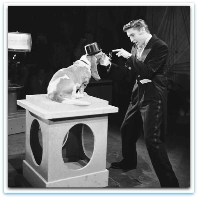 Don Sullivan Dog Training Torrant