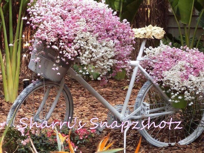 Sharri's Snapzshotz