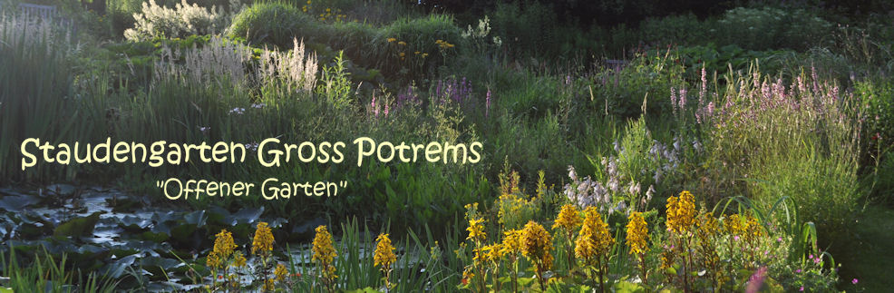 Staudengarten Gross Potrems