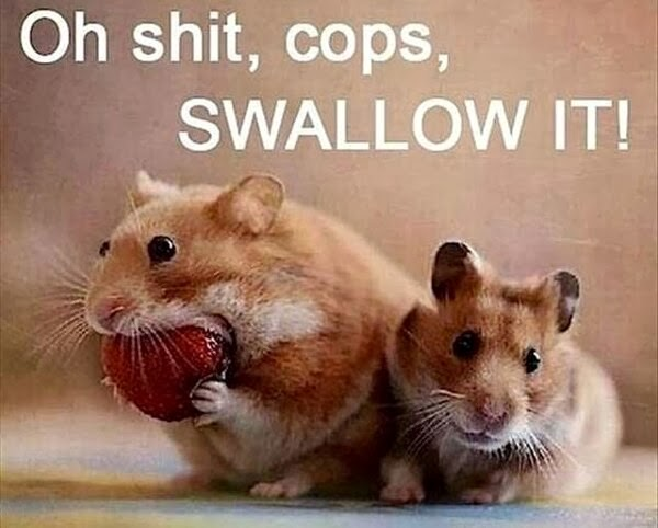 30 Funny animal captions - part 19 (30 pics), mouse meme, oh shit cops swallow it