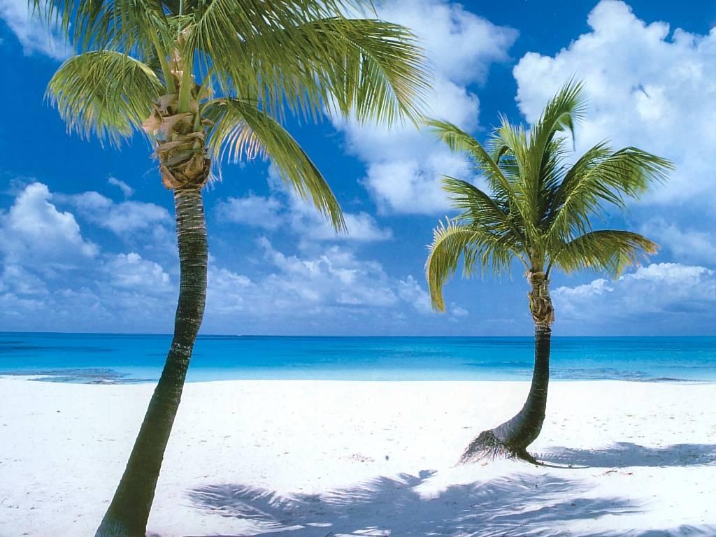 World Of Beauty The Beach