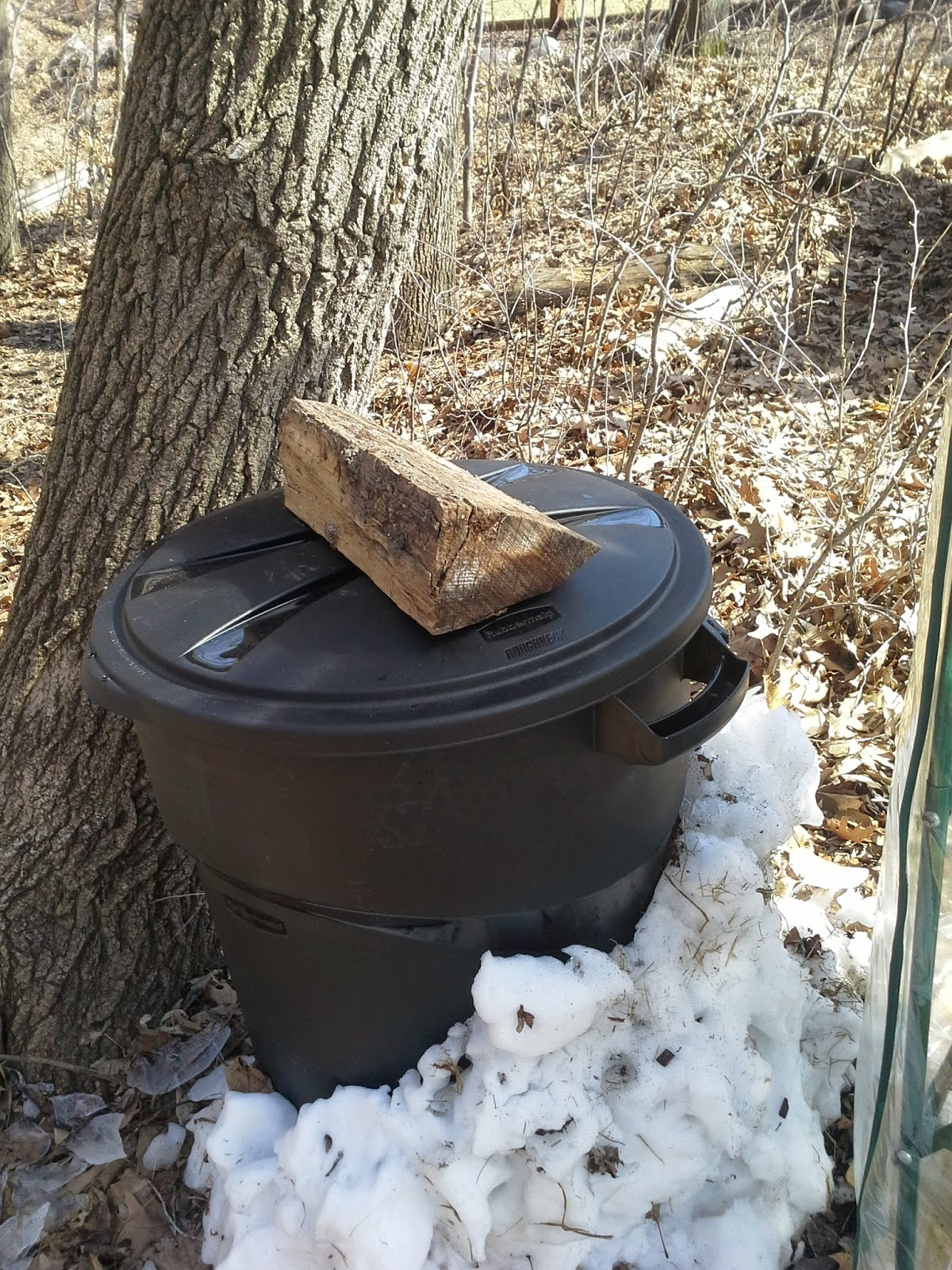 Storing maple sap outside to make maple syrup