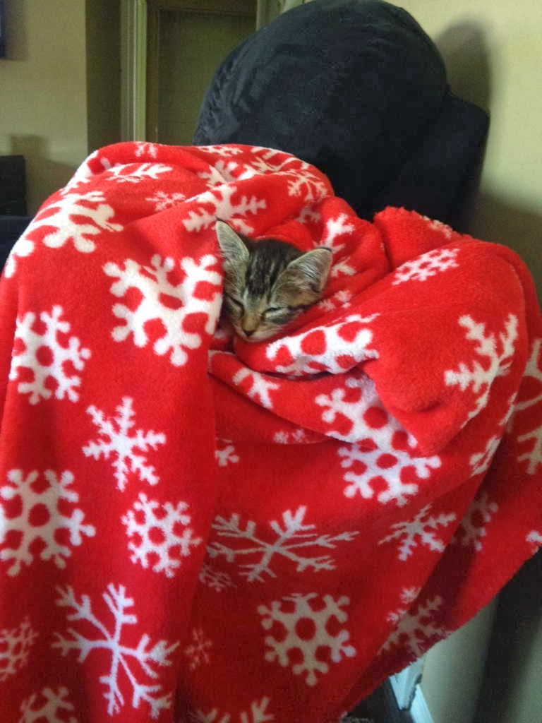 Funny cats - part 85 (40 pics + 10 gifs), cat sleeps in blanket