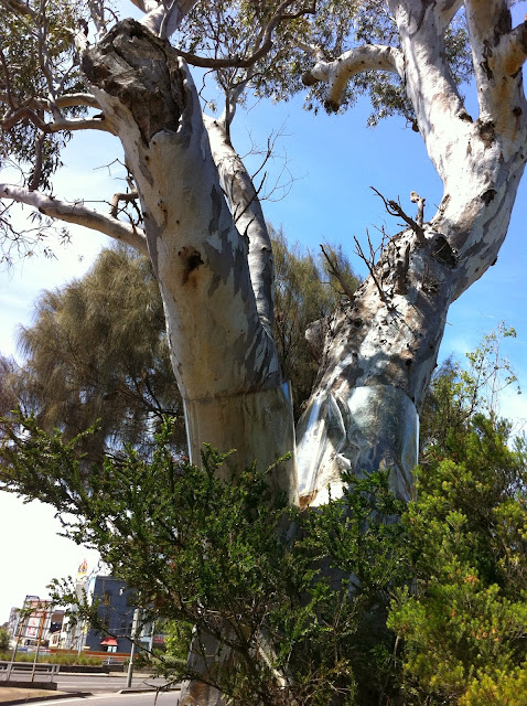Corroboree Tree (River Red Gum). (2012)