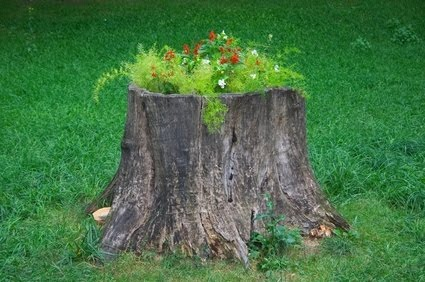 Stump Planter