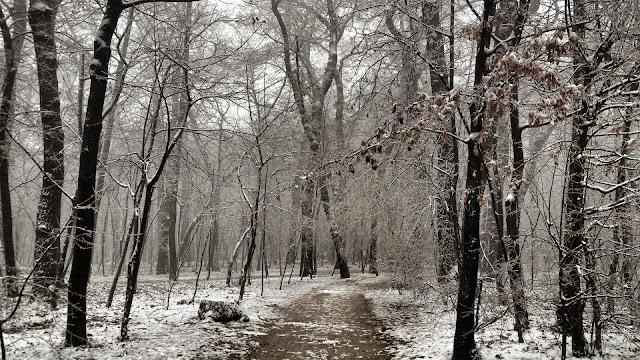 Hình nền rừng cây mùa đông