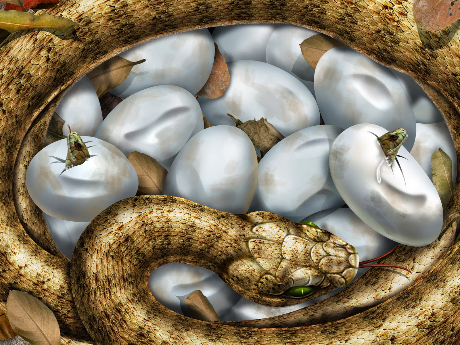 3d and hd snakes wallpapers free dwonload for pc my pinoo