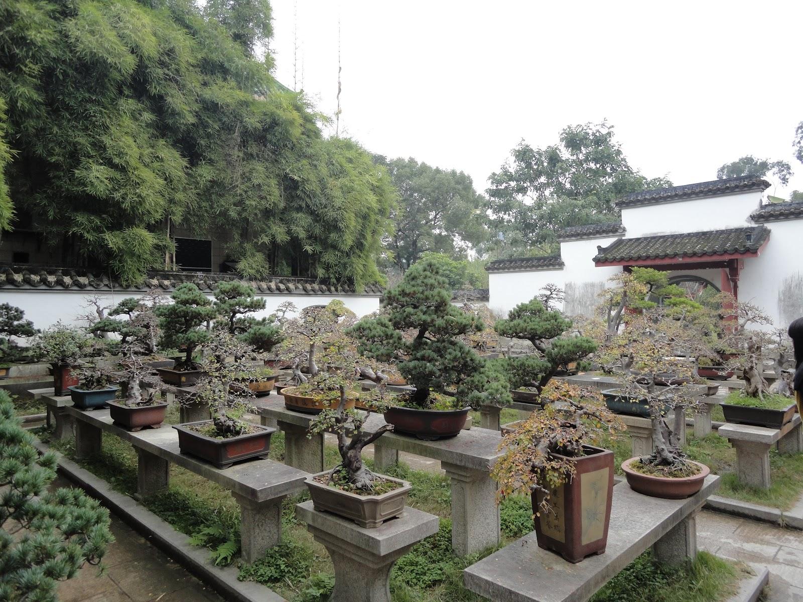 giardino di bonsai in cina saper vivere