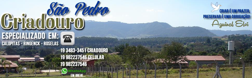 Criadouro São Pedro