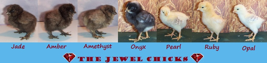 The Jewel Chicks