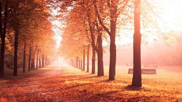 Autumn park trees road leaves yellow HD Wallpaper