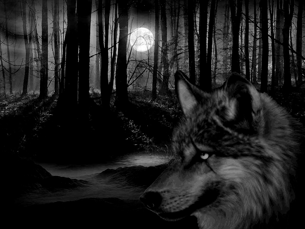 wolf howling at full moon wallpaper