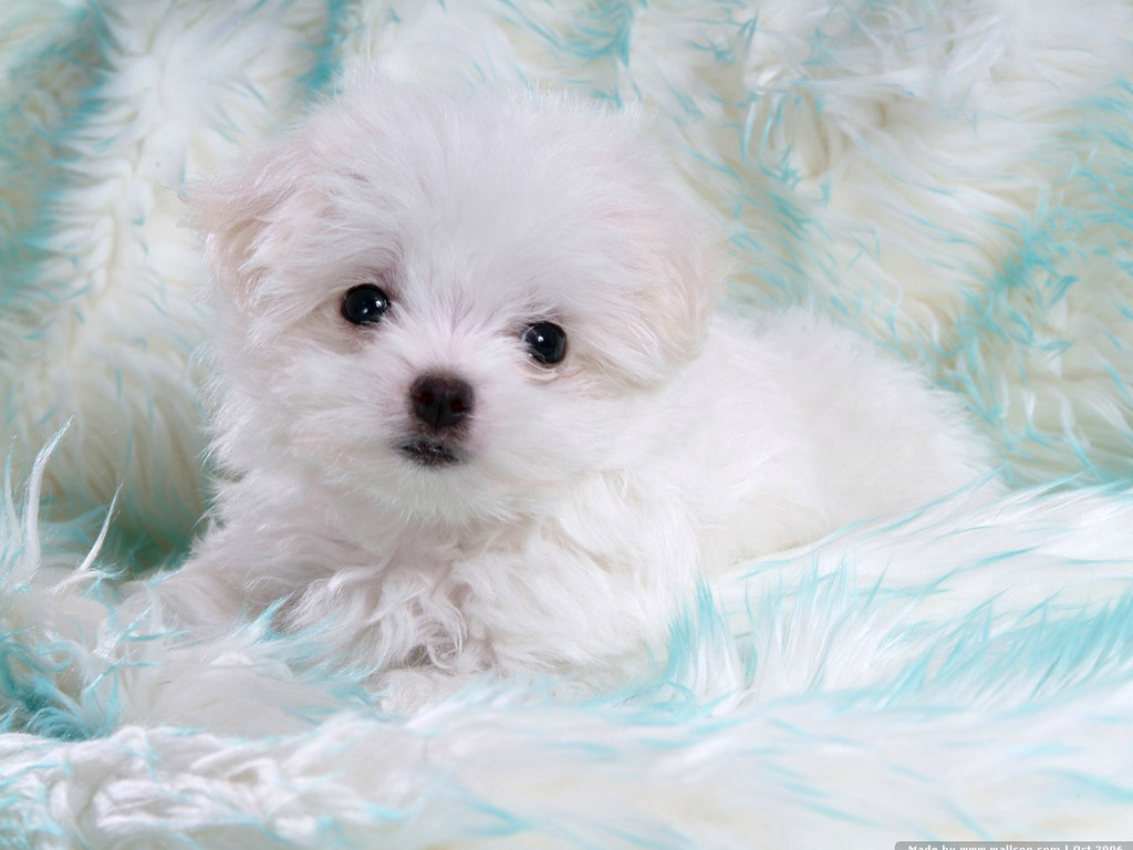 images of baby dogs - photo #24