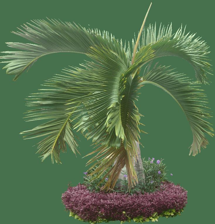 Palma Interior Plants
