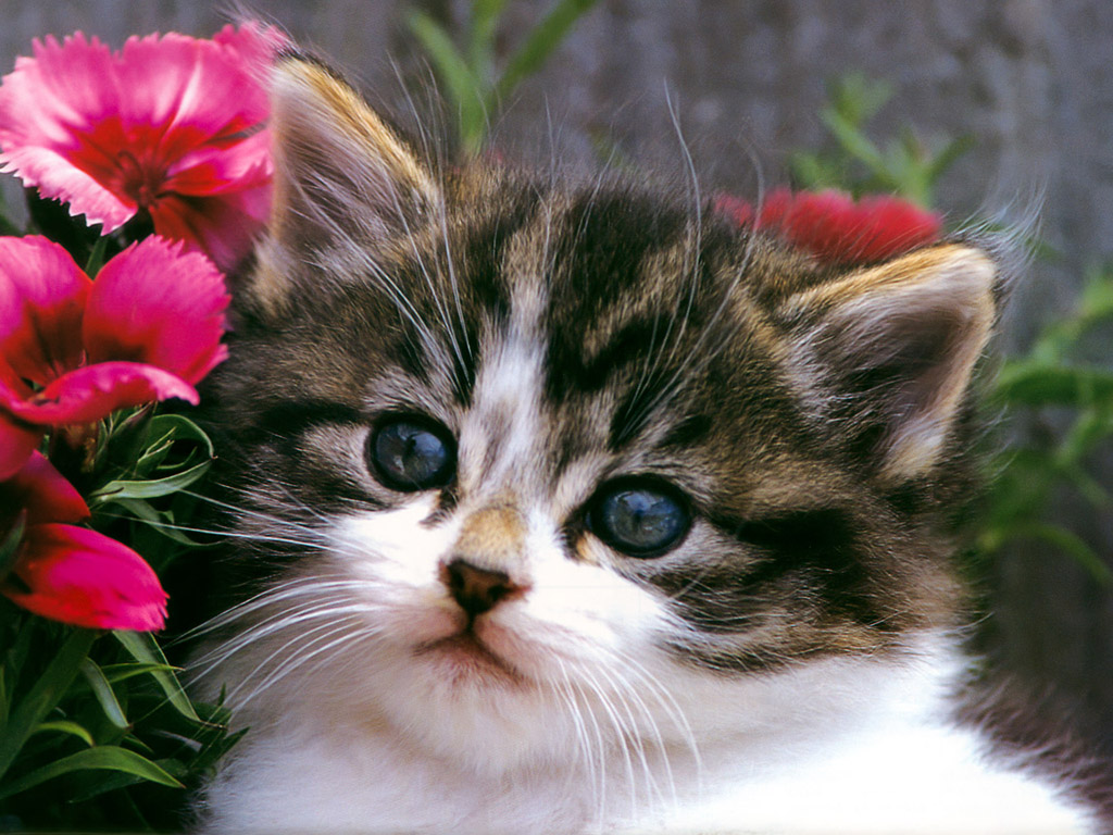 Wallpaper Gallery: Cat & Kittens Wallpaper -3