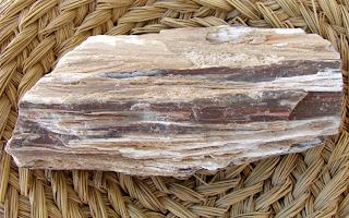 Proprietăţile stranii ale lemnului pietrificat