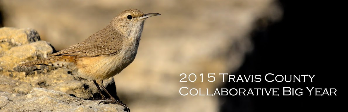 Travis County Collaborative Big Year 2015