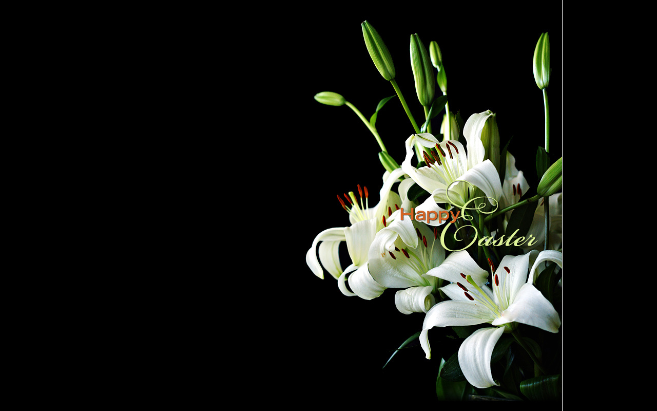 free holiday wallpapers easter lily wallpapers