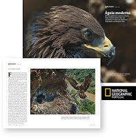 Aguia-real :: Artigo National Geographic Magazine - Portugal