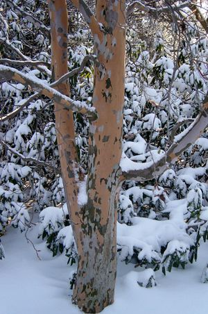 Nature four seasons 4 easy steps to prepare your trees and plants for winter - Autumn plowing time all set for winter ...